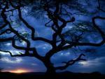 Drzewo na niebieskim niebie