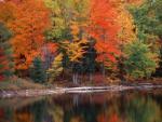 Las Narodowy Hiawatha Michigan