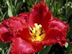 Kwiaty HD