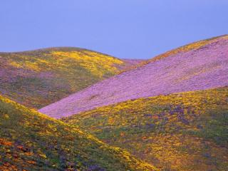 Obrazek: Ablaze with Spring Colors, Gorman, California