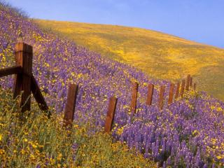 Obrazek: Barbed Wire and Wildflowers, Gorman, California