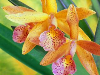 Obrazek: Colorful Orchids