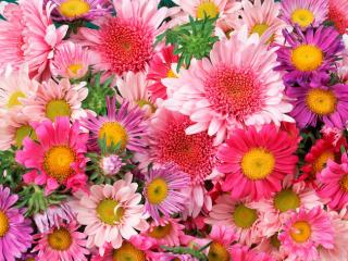 Obrazek: Daisies and Mums