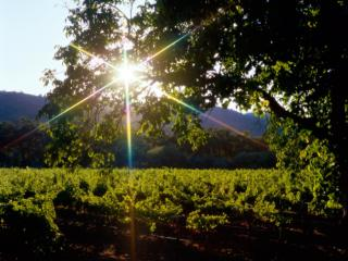 Obrazek: Napa Valley, California